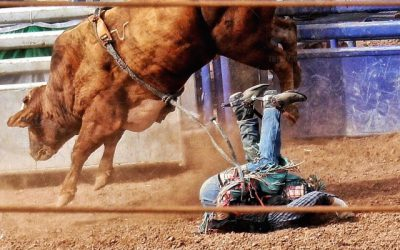 Rodeo in Manorville Denied