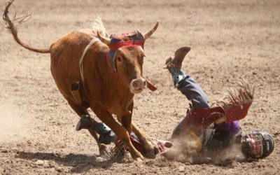 Rodeo in Coram Denied
